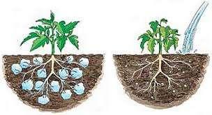 Photo of سوپر جاذب کشاورزی استاکوزورب – هیدروژل کشاورزی – کاهش مصرف 50 درصدی آب در کشاورزی