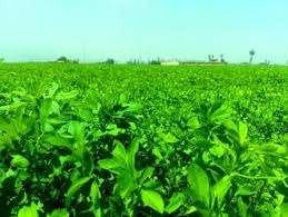 Photo of کاهش مصرف آب در کشاورزی – کشت یونجه با سوپرجاذب – شرکت آتیه انرژی