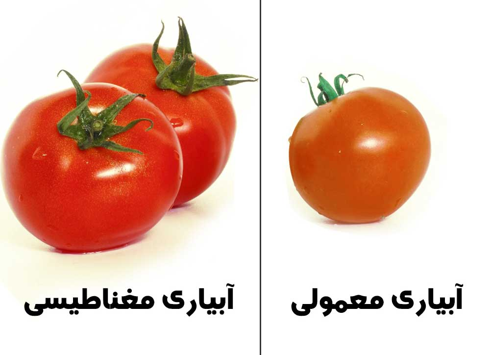 تفاوت کیفیت در نوع ابیاری